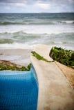 Iguana do Poolside fotografia de stock
