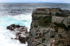 Iguana e granchi marini della Sally Lightfoot Immagini Stock Libere da Diritti