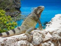 Iguana ed il mare Fotografie Stock Libere da Diritti