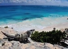iguana en la playa del tulum Fotos de archivo