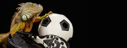 Iguana in football concept Stock Photography