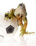 Iguana in football concept Royalty Free Stock Image