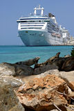 Iguana in front of cruise ship Royalty Free Stock Photos