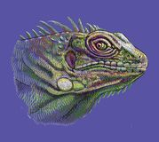 Iguana head artistic drawing Stock Photos