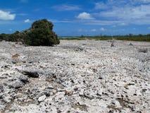 Iguana Island, Cayo Largo, Cuba. This dry land is home to many Iguanas at Cayo Largo, Cuba Royalty Free Stock Images
