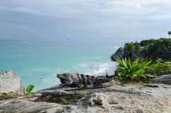 Iguana at Mayan ruins at tulum,cancun,mexico. Ruins at the beach,tulum stock photos