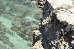 Iguana na krawędzi fotografia royalty free
