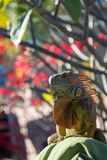 Iguana perched on cushion with blurry floral background royalty free stock photo