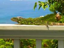 Iguana perches on railing above Caribbean Sea. An iguana perches on a sun-warmed railing overlooking the Caribbean Sea Stock Image