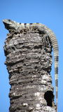 Iguana on a pole in Mexico. Large Iguana on top of a pole in Mexico against a blue sky Stock Photography