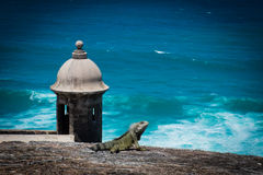 Iguana on puerto rico fortress. With the blue ocean on the background Stock Image