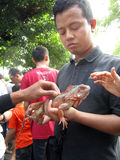 Iguana. Reptile lovers  introduce iguana to the public at a park in the city of Solo, Central Java, Indonesia Royalty Free Stock Photography