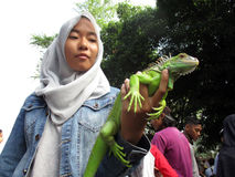 Iguana. Reptile lovers  introduce iguana to the public at a park in the city of Solo, Central Java, Indonesia Royalty Free Stock Photos