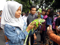 Iguana. Reptile lovers  introduce iguana to the public at a park in the city of Solo, Central Java, Indonesia Stock Photography