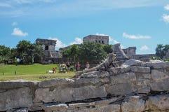 Iguana in rovine di Tulum immagine stock