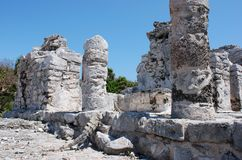 Iguana In Ruins. An iguana climbing Tulum ruins in famous Mayan archaeological site, Mexico royalty free stock image