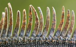 Iguana scales stock images