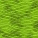 Iguana Skin Stock Photo
