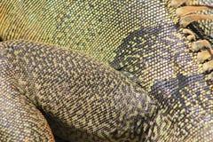 Iguana skin in detail Royalty Free Stock Photos