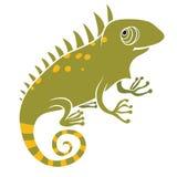 Iguana su fondo bianco Fotografia Stock Libera da Diritti