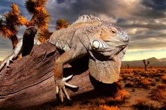Iguana at sunset. Sitting on an old tree trunk royalty free stock photo