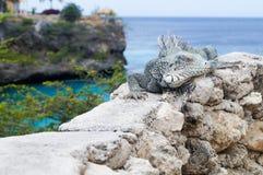 A iguana toma sol no sol fotos de stock