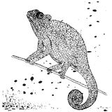 Drawing of an iguana sitting on a branch. Suitable for tattoo stock illustration