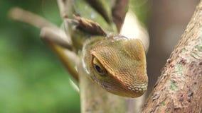 Iguana verde, iguana de la iguana almacen de metraje de vídeo