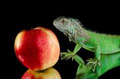 Iguana verde en el espejo y la manzana roja Foto de archivo