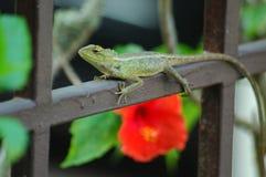 Iguana verde en el pasamano Imagenes de archivo