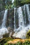 Iguana w lesie obok wodnego spadku Kubańczyk rockowa iguana () Obraz Royalty Free