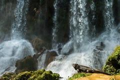 Iguana w lesie obok wodnego spadku Kubańczyk rockowa iguana () Zdjęcia Royalty Free