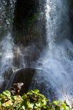 Iguana w lesie obok wodnego spadku Rockowa Kubańczyk iguana (Cyclura nubila) Zdjęcia Royalty Free