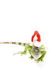 Iguana wearing christmas hat royalty free stock images