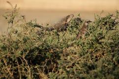 Iguana y pájaro en la hierba Foto de archivo libre de regalías