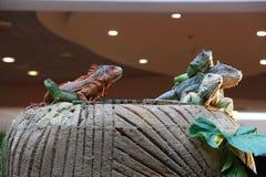 Iguanas και κινεζικός δράκος νερού σε έναν βράχο Στοκ φωτογραφίες με δικαίωμα ελεύθερης χρήσης