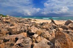 Iguanas en la playa Imagenes de archivo
