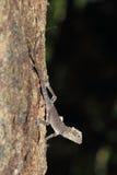 Iguane dans la jungle Photos libres de droits
