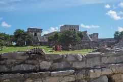 Iguane nel vecchio sito maya in Tulum, Quintana Roo, Messico fotografia stock libera da diritti