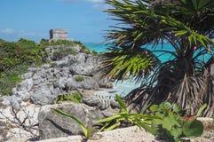 Iguane nel vecchio sito maya in Tulum, Quintana Roo, Messico immagini stock libere da diritti