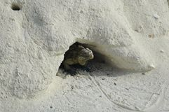 iguane sur l'île d'iguane Images libres de droits