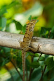 Iguane sur la branche Photographie stock libre de droits