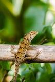 Iguane sur la branche Image stock