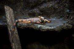 Iguane vert chez Bioparco Image libre de droits