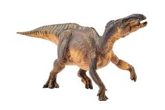 Iguanodon, δεινόσαυρος στο άσπρο υπόβαθρο στοκ εικόνα με δικαίωμα ελεύθερης χρήσης