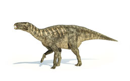 Iguanodon Dinosaur photorealistic representation, side view. Stock Image