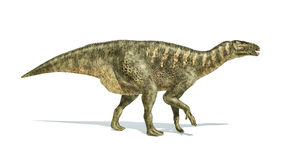Iguanodon Dinosaur photorealistic representation, side view. Royalty Free Stock Images