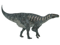 Iguanodon strony profil Fotografia Royalty Free