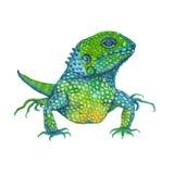 Iguany jaszczurka odosobniony beak dekoracyjnego latającego ilustracyjnego wizerunek swój papierowa kawałka dymówki akwarela fotografia royalty free