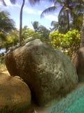Iguany plaży krajobraz na górze kamienia sunning na krawędzi basenu w tropikalnym środowisku na Isla Margarita zdjęcie royalty free